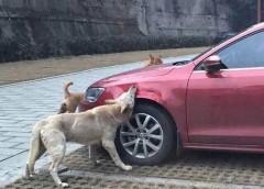 З «автохамами» борються навіть собаки (фото)