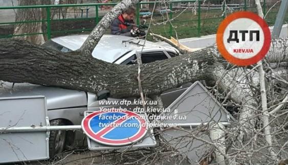 "Божа кара:  дерево впало на машини ""героїв парковки"" (відео)"