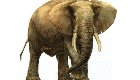 Як величезний слон чавив авто на дорозі (відео)