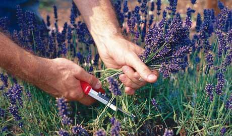 Народна медицина: цілющі рослини і їх властивості