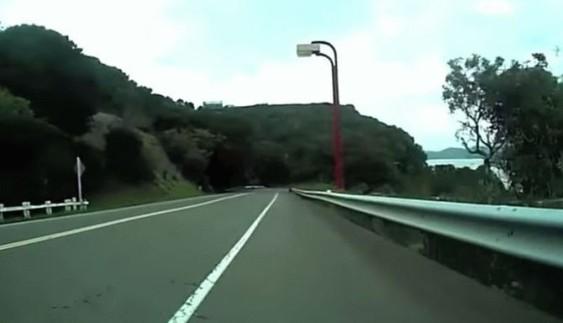 Що буде, якщо натрапити на оленя на швидкості 50 км/год