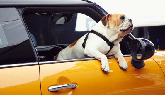 Найдивніші правила дорожнього руху