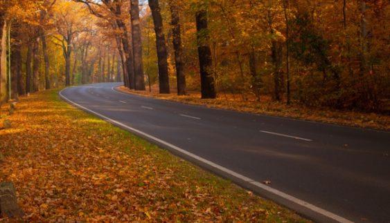 Особливості осіннього водіння авто: як не потрапити в аварію на мокрій дорозі і через туман